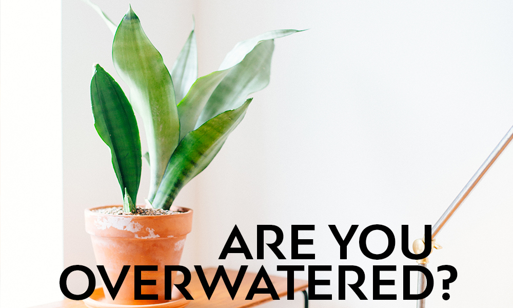 Are you overwatered?